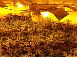 wietplantage